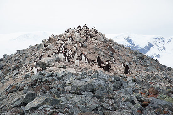 penguins_rocks