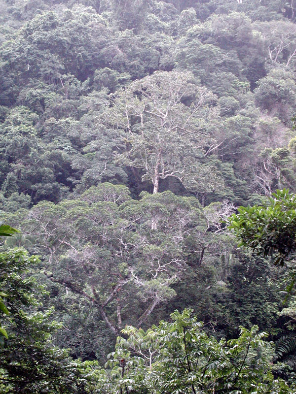 Photos of trees in Madidi National Park in Bolivia