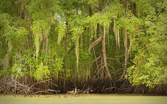 equadorian mangroves