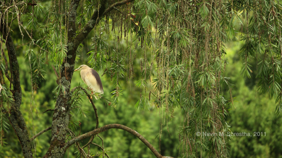 Bird in Godawari Forest